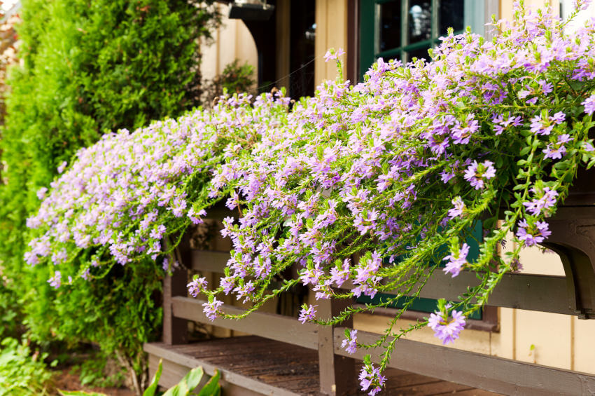 Example of a window sill flower box with one type of flower throughout.