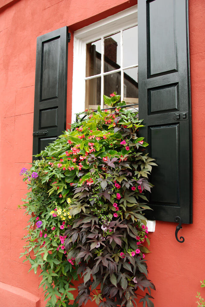 Window flower box with plants and flowers hanging out appearing as if pouring out of the window.