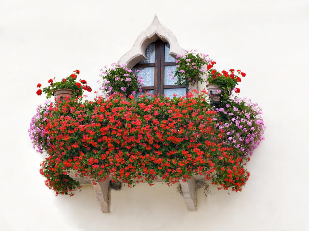 Window flower box overflowing with red and pink flowers.