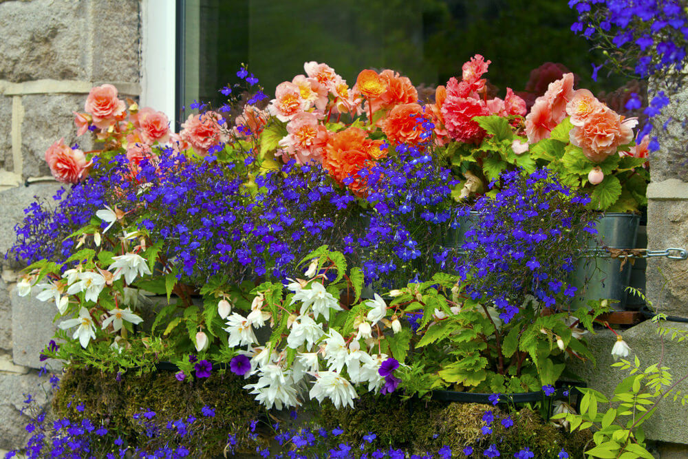 Look closely and he'll see this is a really neat example of cascading flower boxes which is one on top of the other in a tiered format creating a tiered flower box arrangement.