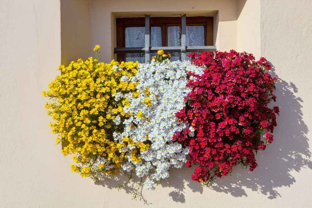 Very cool tri-coloured flower box with yellow white and red flowers spilling out the front of the box.
