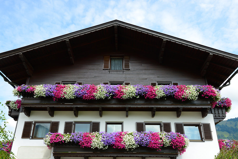 Swiss chalet styled building with long large flower box spanning the full width of the building containing white fuchsia and purple flowers arranged in a repeating pattern. Spectacular!