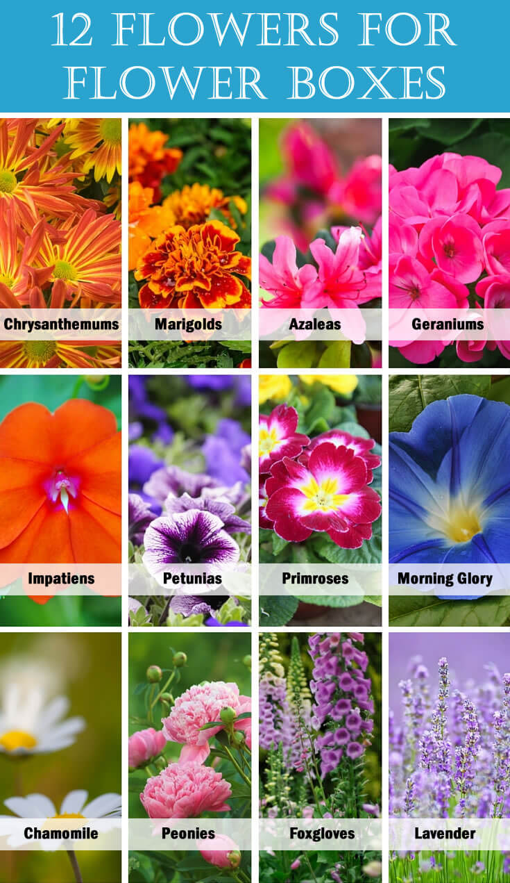 12 Flowers for Flower Boxes