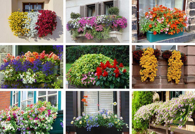 40 Window and Balcony Flower Box Ideas (PHOTOS) - Home ...