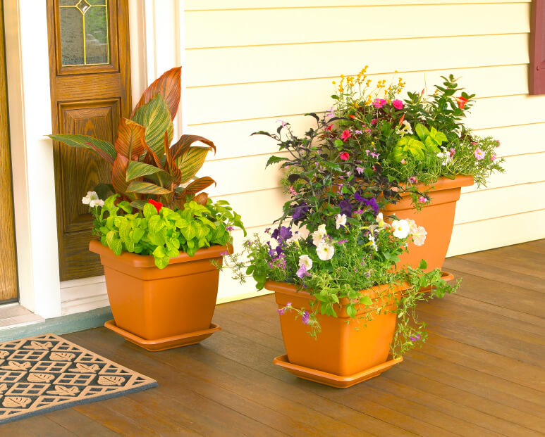 Assorted plants look even more decorative when planted all in one pot. These pots arranged in different sizes look organized and welcoming.