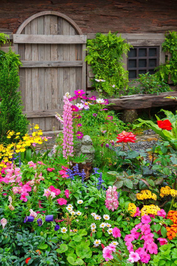 A front yard garden with colorful blossoms in purple, pink, yellow, white and orange. Present in this assembly of colors are petunia, chamomile, dancing lady, hyacinth and roses.