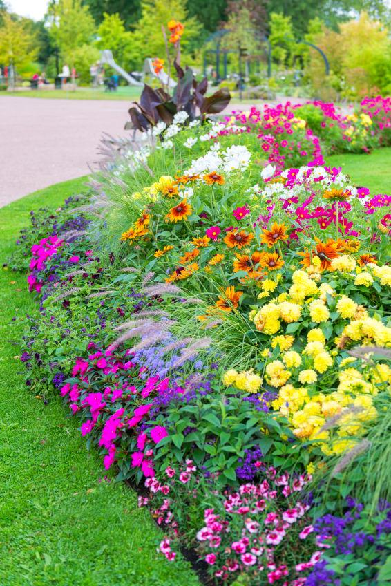 Beautiful blossoms of pansies, petunias, and cosmos stun in their most colorful blossoms.
