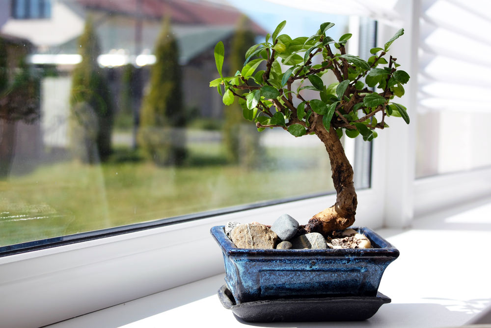 20-bonsai-tree