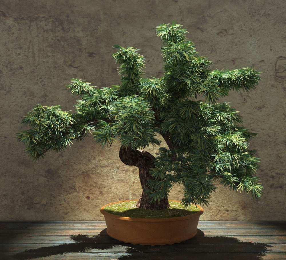 30-bonsai-tree