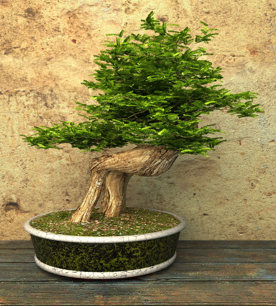 31-bonsai-tree