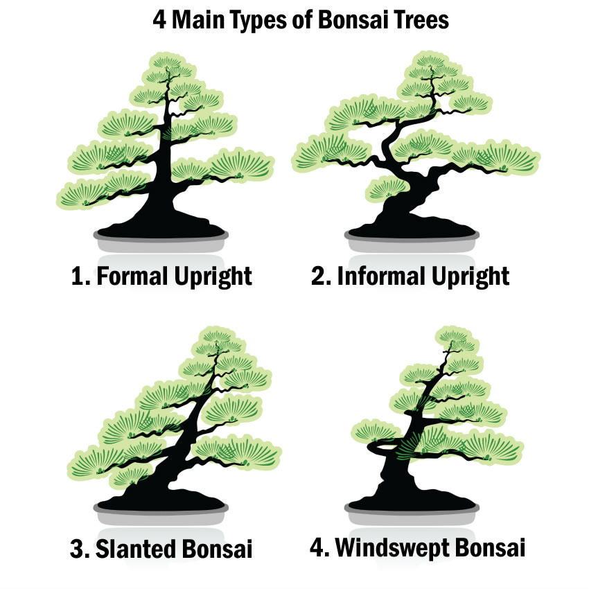 4 Main Types of Bonsai Trees