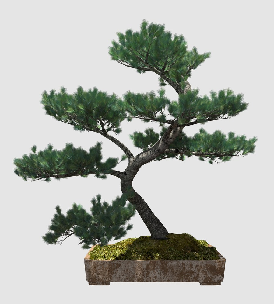 Informal Upright Bonsai
