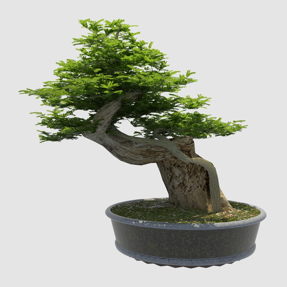 Slanted Bonsai